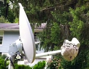 Hornets on the Satellite Dish, day 3