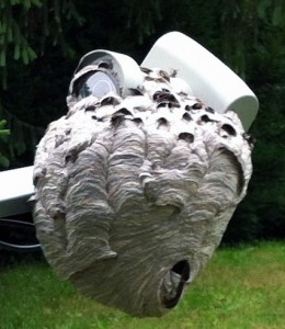 hornets nest on satellite dish