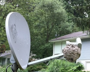 hornet's nest on satellite dish